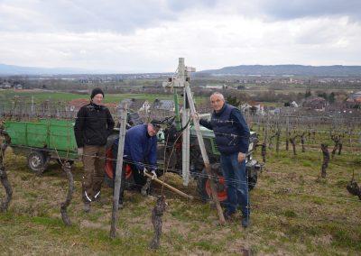 Ausbesserungsarbeiten im Weinberg